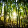 ¿Los bosques son una buena inversión?